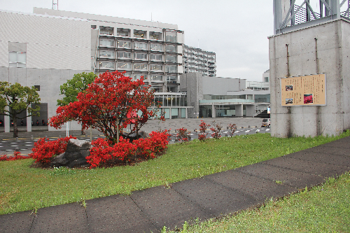 ④霧島市役所お祭り広場前開花状況(H29.4.17撮影)